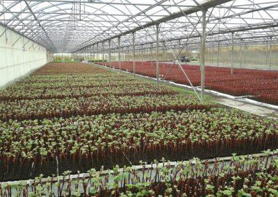 Plants en pots sous serre
