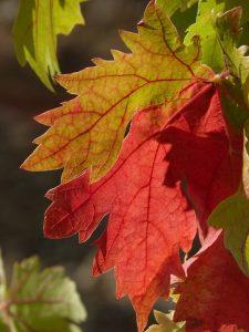 leaf-1745298_960_720